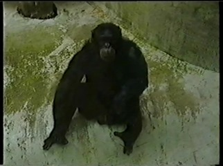 2001.08.26-004 chimpanzé