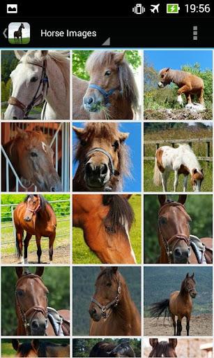 HorseBG: The Horse Wallpapers