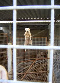 A Matilha Dog' Story (Disturbing Images) - Other Ways We Help