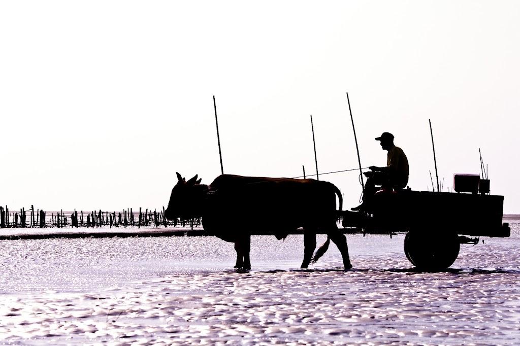 遺忘的故事-小時的牛蚵車
