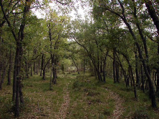 bosque de robles