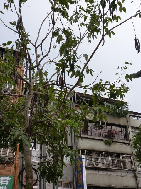 TAIWAN. Taipei ballade dans un vieux quartier - P1020625.JPG