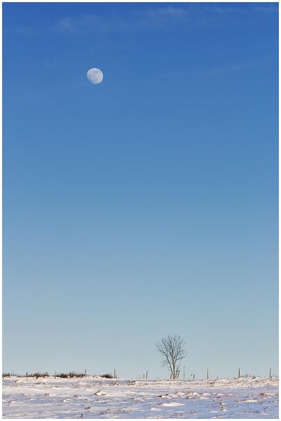 Photos du 5 février 2012 DSC_5796%2520raw-594%252Bcadre