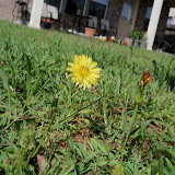 Gardening 2010, Part Two - 101_2394.JPG