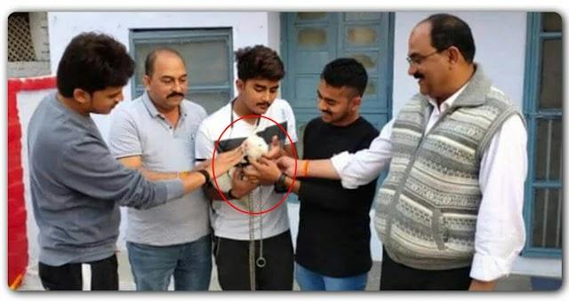 जंगल में पाई जाने वाली दुर्लभ बिल्ली से बन गया lakhpati भाई, जानिए क्या खास है इस बिल्ली के बारे में?