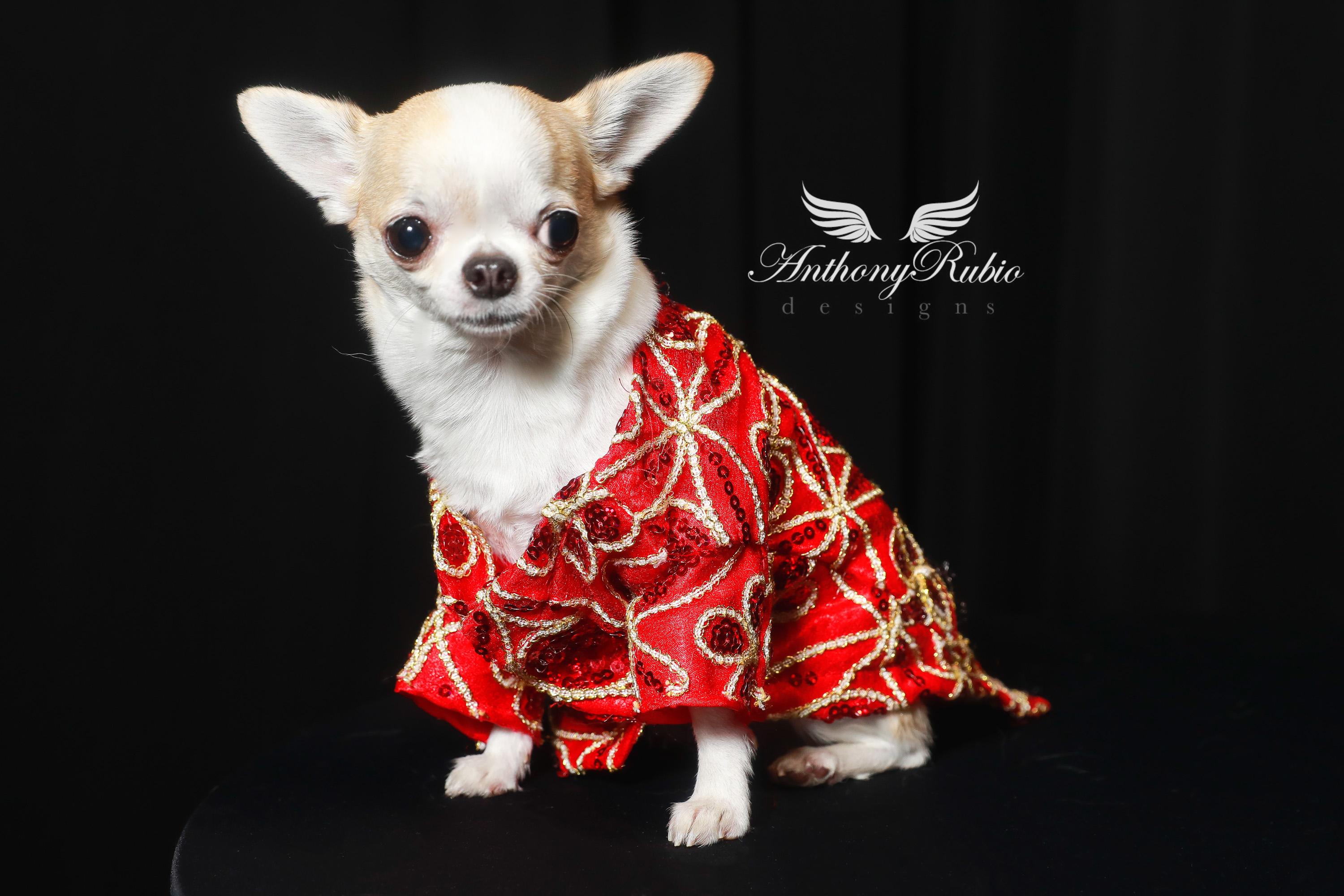 BEAUTIFUL FASHIONABLE PETS WOMEN CAN OWN IN THEIR HOME TO ENJOY 4
