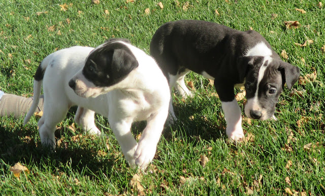 girls @ 6 weeks