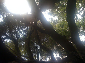 Photo: Aaron likes to climb in trees during our breaks. Can you see him? Try to spot him in the next few photos.