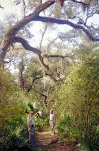 Photo: 2A101160 FL - Withlacoochee River Park – drzewa obrośnięte hiszpańskim mchem