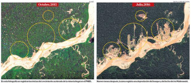 Satellite views of the Bahuaja Sonene National Park (USD35), located between the regions of Madre de Dios and Puno in Peru, showing deforestation due to illegal gold mining in July 2016 (right). Photo: Digital Globe