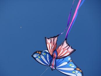 2017.05.21-008 papillon