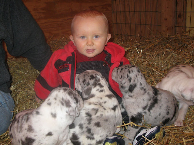 Elliot (Louise's big brother) meeting the puppies!