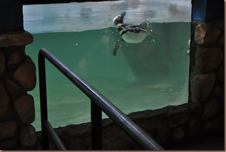 08-17-16 Boise Zoo 07