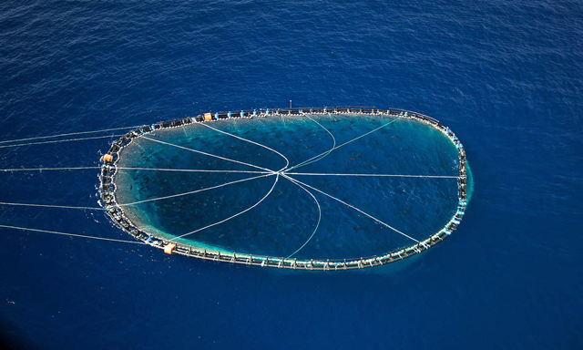 A bluefin tuna cage being towed by an Italian fishing boat in the Mediterranean. Photo: Gavin Parson / AFP / Getty Images