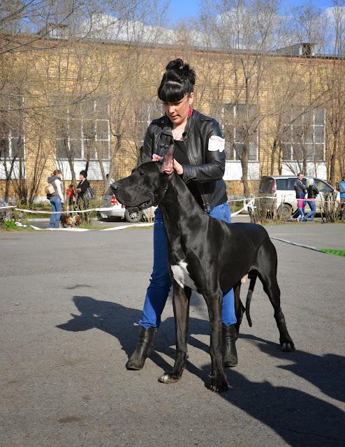 Кубок Аризоны-14(ПК)+ЧРКФ, Красноярск, 27 апреля 2014 DSC_5973