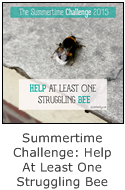 a summertime challenge for city dwellers - help at least one struggling bee this summer