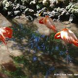 04-07-12 Homosassa Springs State Park - IMGP0049.JPG
