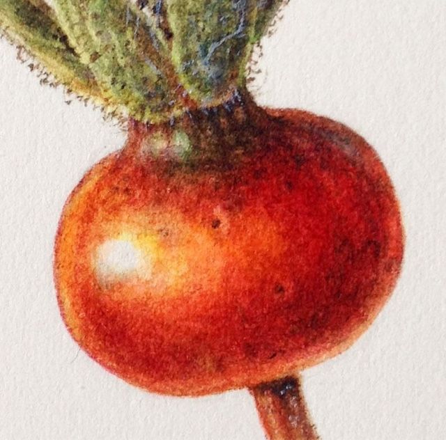 Rose hip using dry brush