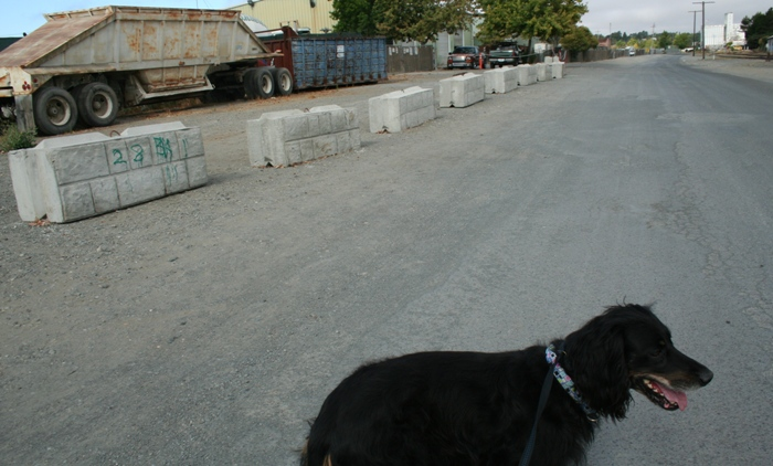 industrial road bordered by big cement road block thingies, in the foreground is black gordon setter