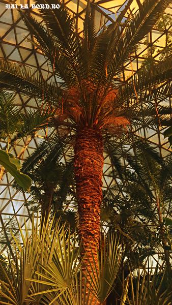 palmier gradina botanica jibou