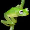 Kermithefrog