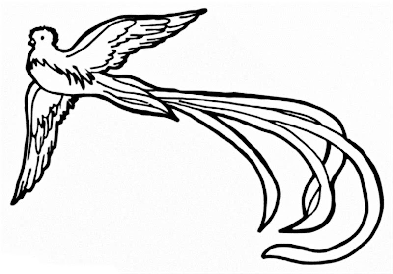 Images of the Resplendent Quetzal coloring pages
