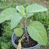 Gardening 2012 - IMG_2896.JPG