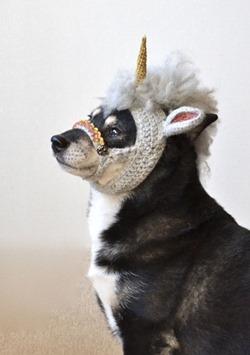 unicorn-mask-for-dogs-4