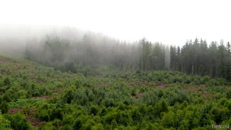 fs_2016-08-12 Trossachs e West Highlands _0057