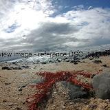 DSC_1711.thumb.jpg