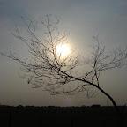 Enredado entre las ramas