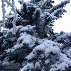 Зимняя уборка в Дендрарии 016.jpg