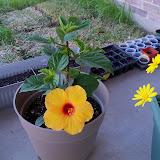 Gardening 2010 - 101_0483.JPG