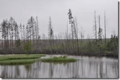 forets et étangs de Carélie