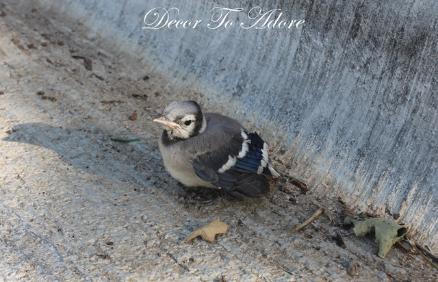 baby bird 004