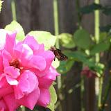 Gardening 2012 - IMG_3811.JPG