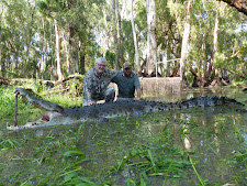 4.4M crocodile harvested at Carmor Plains in January. A very old crocodile taking cattle and buffalo from this paperbark swamp for years.