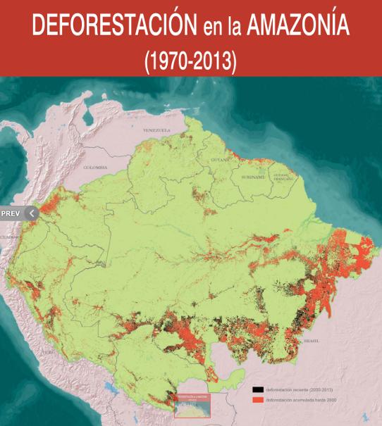La deforestación afecta con énfasis las cuencas de ríos Mamoré y Beni