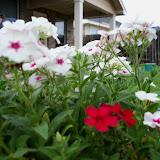 Gardening 2014 - 116_1251.JPG