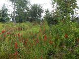 Meadow Wow