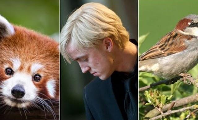 Harry Potter: 5 animais patronos que Gêmeos provavelmente teriam
