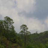 La forêt sur le Shibao Shan (2400 m) au-dessus de Shaxi (Yunnan), 8 août 2010. Photo : J.-M. Gayman