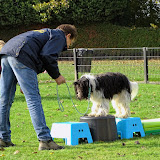 "Workshop ""Dogs in Balance"""