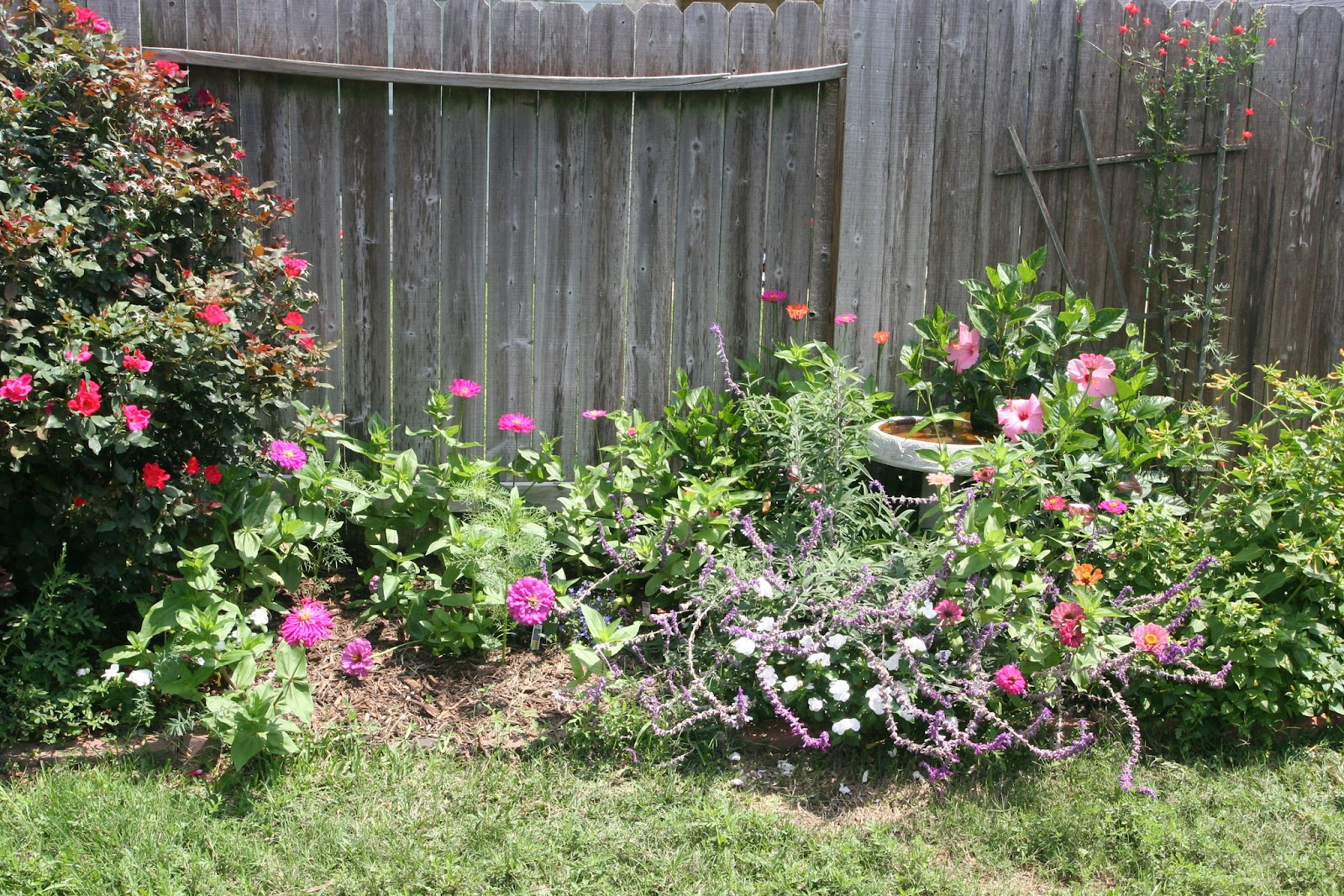 Gardening 2012 - IMG_3801.JPG