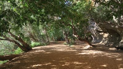 Walk into Gorge