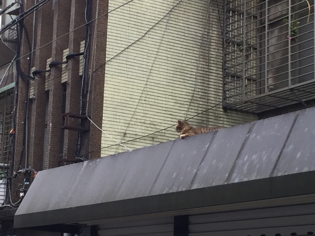 健康路 見守る猫