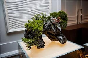 2010年 大阪堂島ホテルでのウェディングディスプレイ 石付盆栽