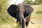 Vi nåede lige at støde ind i et par elefanter mere på vej ud af Krüger.