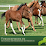 Turnier Pferde's profile photo