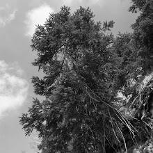Orientacijski vikend, Črni dol 2007 - P0176108.JPG